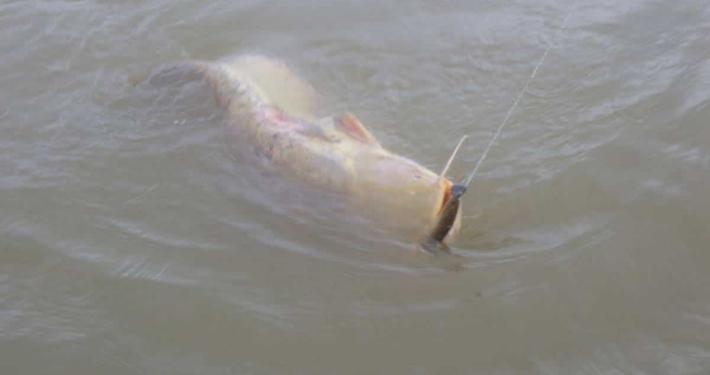 Premiers poissons de l'année !