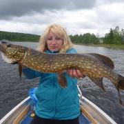 Pike in Sweden