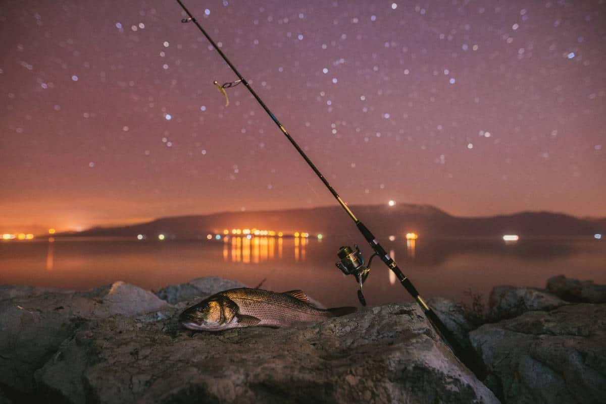 Golden night for golden bay sakura fishing for Golden night