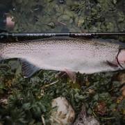 robert-pljuscec-sakura-fishing croatia rainbow trout with trinis neo 632ulst