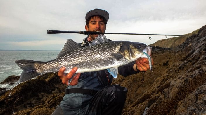 seabass caught on tex shad 100 with a Players PLS 712MH sakura