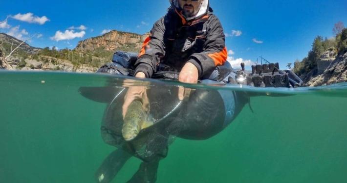 photo subaquatique de adrien taibaoui de la team sakura relache une truite