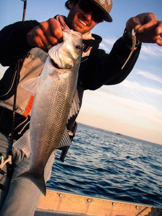thomas gestin team sakura avec une louvine pris sur un L16 koneel sakura fishing