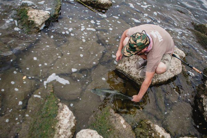 sakura-fishing-catch-and-release-fish