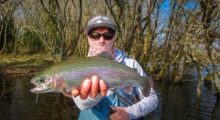 nice rainbow trout caught on sakura Imara inline spoon