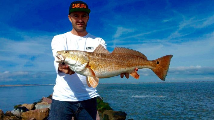 nice redfish caught by jean christophe david team sakura fishing on slit shad