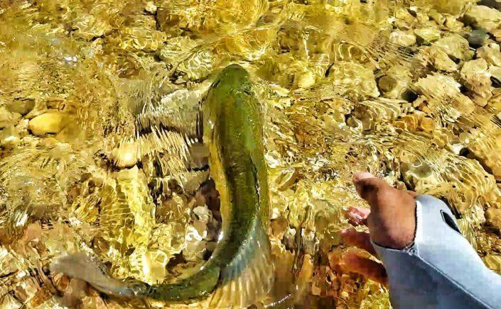 Le Maroc et ses pêcheurs de bass font de gors effort pour préserver cette espèce en pratiquant le catch and release