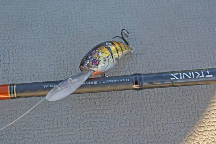 Sakura SCB 400F Bronze perch apres plusieurs jours de peche sur alcantara