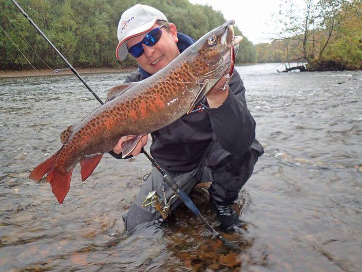 truite lenook au phoxy minnow hw purple trout