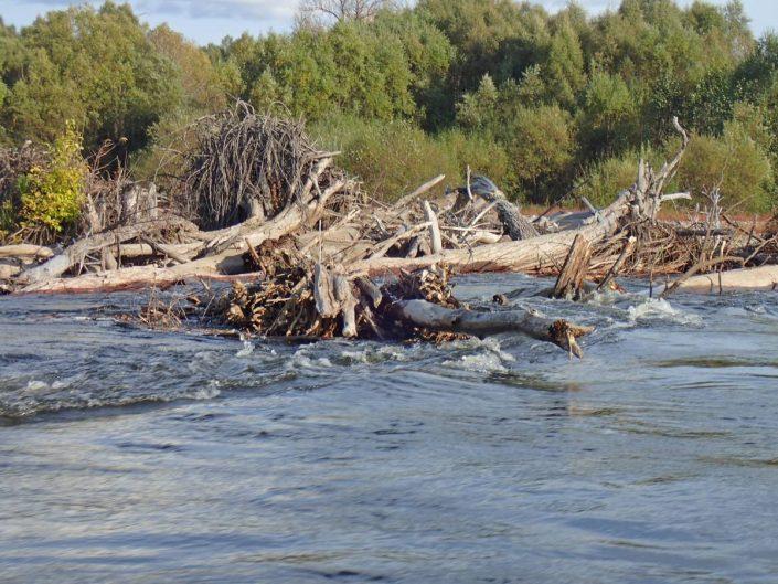 enchevêtrement de bois sur la rivière