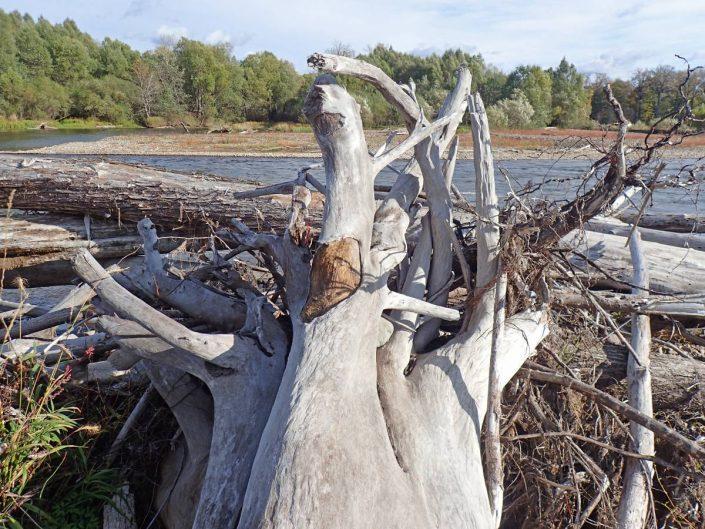 bois mort sur la rivière