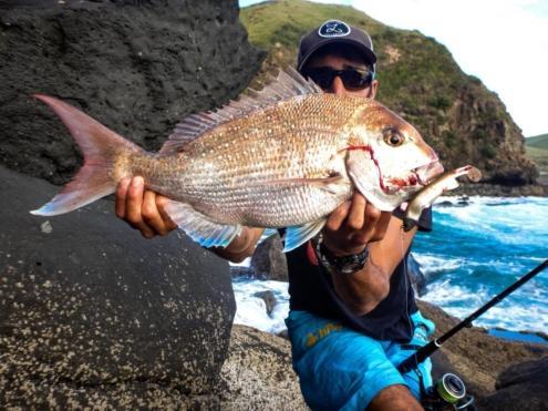Sakura pêche en Nouvelle-Zélande