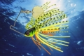 monarc-micro-spinnerbait-2020