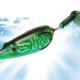 vignette-transition-bubble-frog
